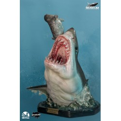 Museum Series: Carcharodon...